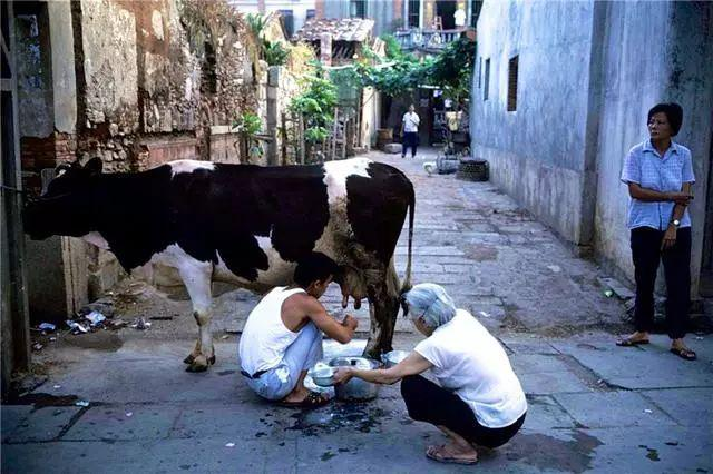 Brief History of Milk Development