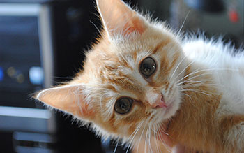 tetracycline for cat