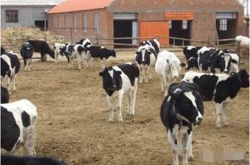 Do you know how to prevent Pear Worm Disease in Dairy Cows2