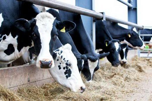 Do you know how to prevent the trypanosomiasis evansi in dairy cows?