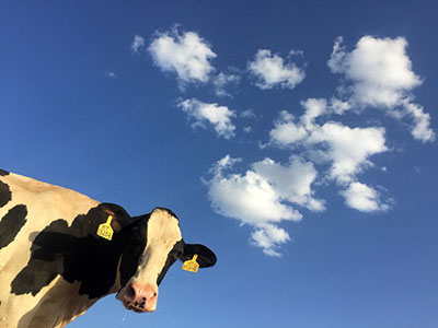 Feeding and Management Methods of High-yielding Dairy Cows at Different Stages