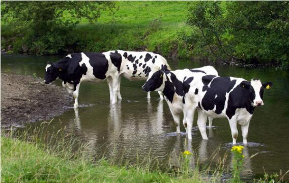 Prevention, Control and Treatment of Several Common Parasitic Dermatoses in Dairy Cows