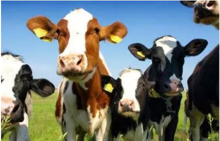 The prevention and treatment of dairy disease