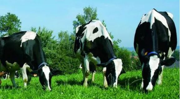 Profit and Cost Analysis of Dairy Cow Breeding