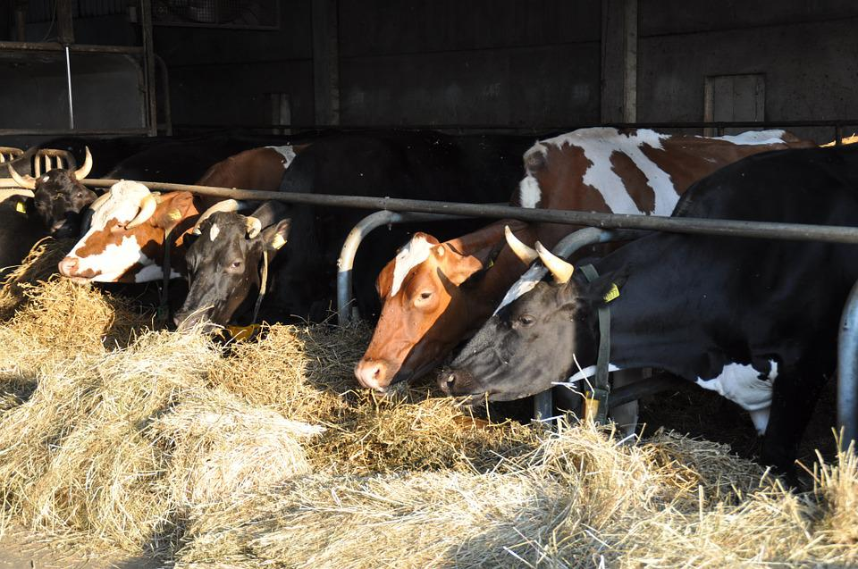 Prevention and Control of Parasitic Diseases in Dairy Cows