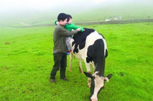 Therapeutic methods of scattered head swelling disease in dairy cows