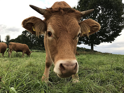 Technical Measures of Beef Cattle Feeding and Management