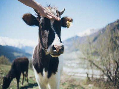 Management Suggestions for Ranch Service