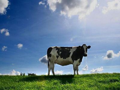 is dairy farming commercial or subsistence,