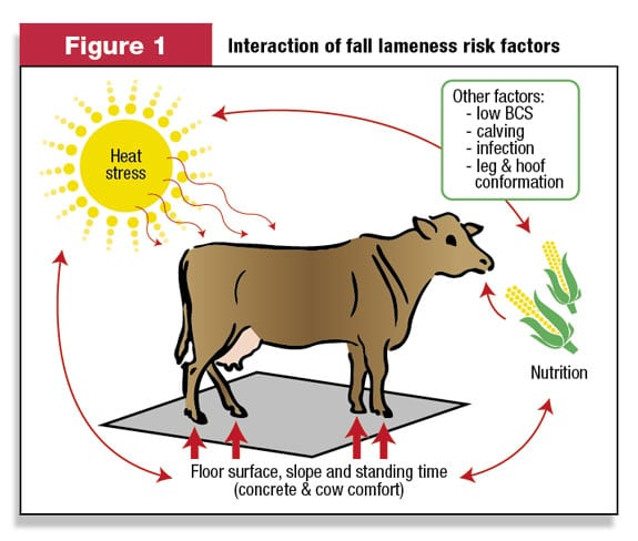How to avoid heat stress affect cows and milk production?