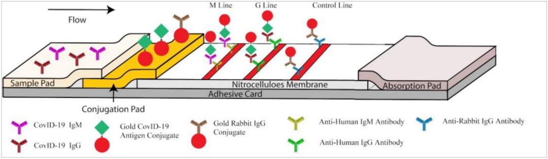 antibody-test-covid-19