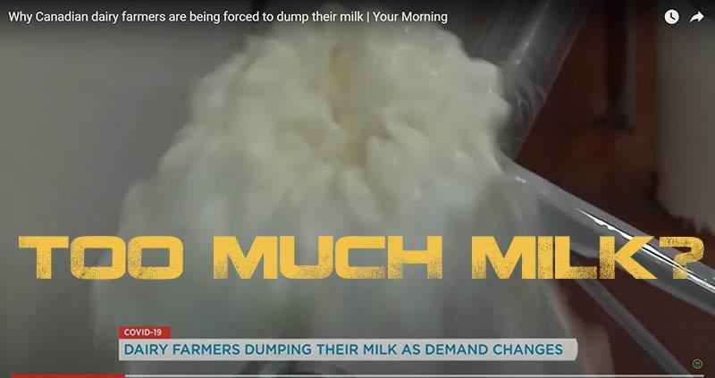 milk farm dumping milk