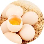 eggs-testing