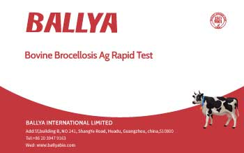 Bovine Brocellosis Ag Rapid Test
