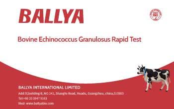 Bovine Echinococcus Granulosus Rapid Test