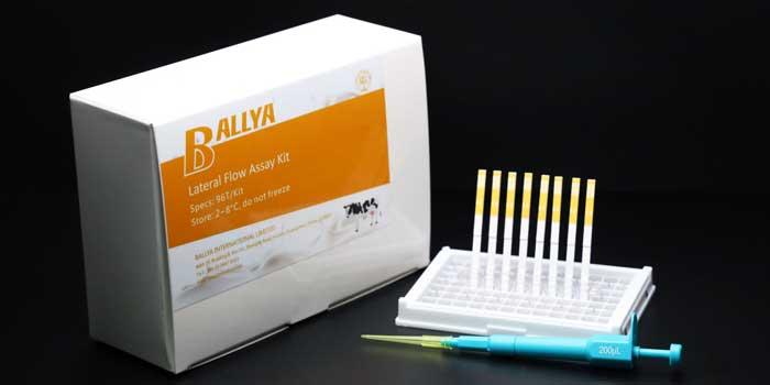 Vitamin B6 Test