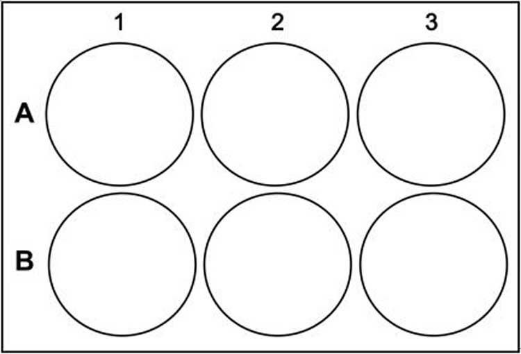 6-well-plate