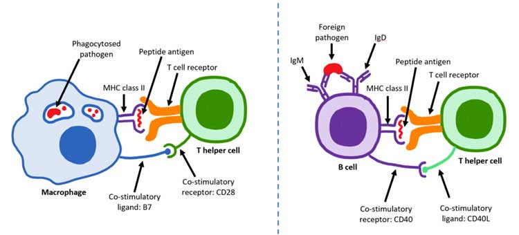 SARS-CoV-2-Antigen-For-Sale