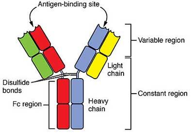 sars-cov-2-antibody-test