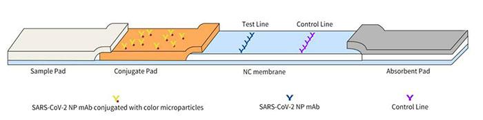 lungene-rapid-test-antigen