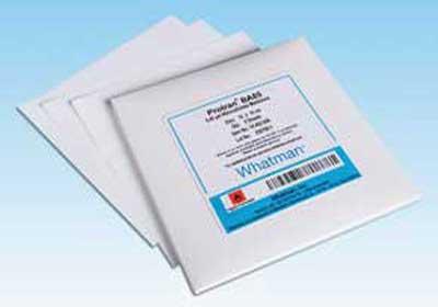 nitrocellulose-price